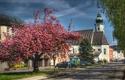 Kirchenplatz, Gemeindeamt, Kirche, blühender Baum   © Nicole Wimmer