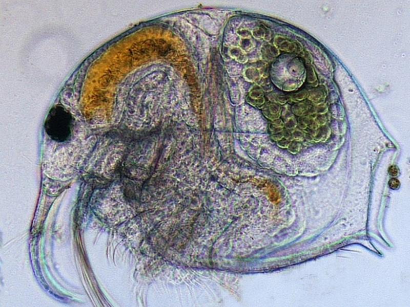 Junge Uni: Superstarke Mikroorganismen – die spannende Welt der Mikroben