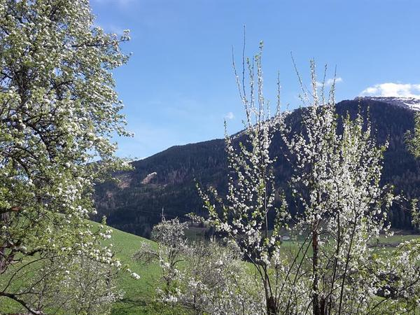 Frühling am Blaserhof