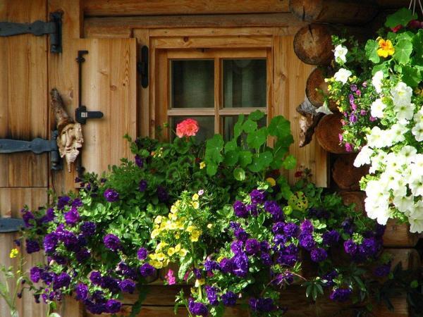Blumen rund ums Haus (1)