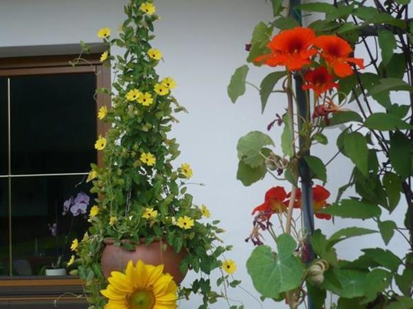 Sommer auf unserer Terrasse