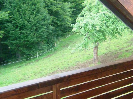Aussicht vom Balkon auf die Wiese und den Wald. (© Schafleitner-Kroiß)