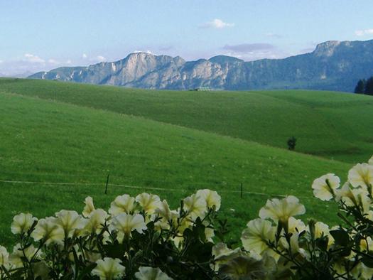 Blick vom Balkon auf die Balkonblumen, die Felder, im Hintergrund die Berge. (© Schafleitner-Kroiß)