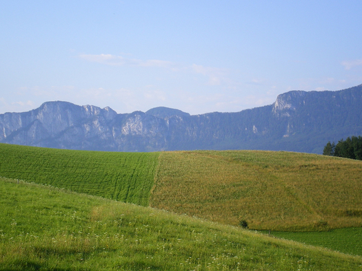 Blick auf die Felder, im Hintergrund die Berge. (© Schafleitner-Kroiß)