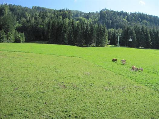 Alpenrose - Balkonblick auf Wiesen und Wälder (© Berghof Sturmgut)