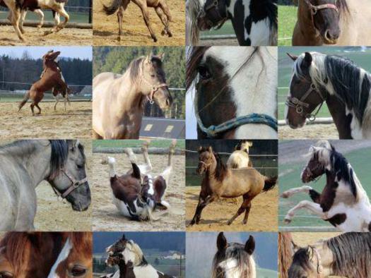 EspiStables Sammelbild Pferde
