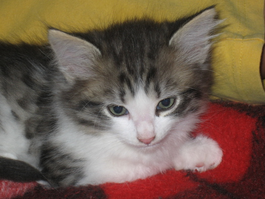 Katze Nelly am Primusbergerhof in Bad Goisern.JPG