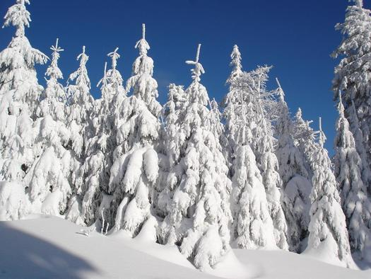 Winter am Schilift