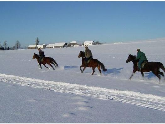 Reiten über verschneite Wiesen
