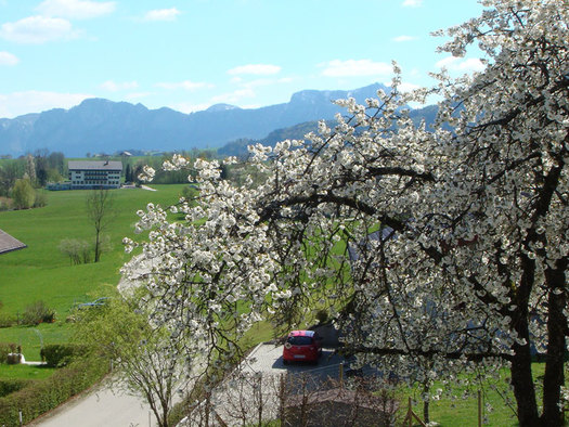Ausblick auf Baum, Wiese und Berge des MondSeeLandes.