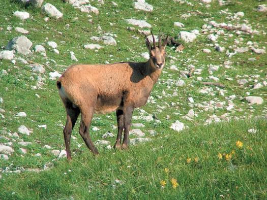 (© Nationalpark Kalkalpen)