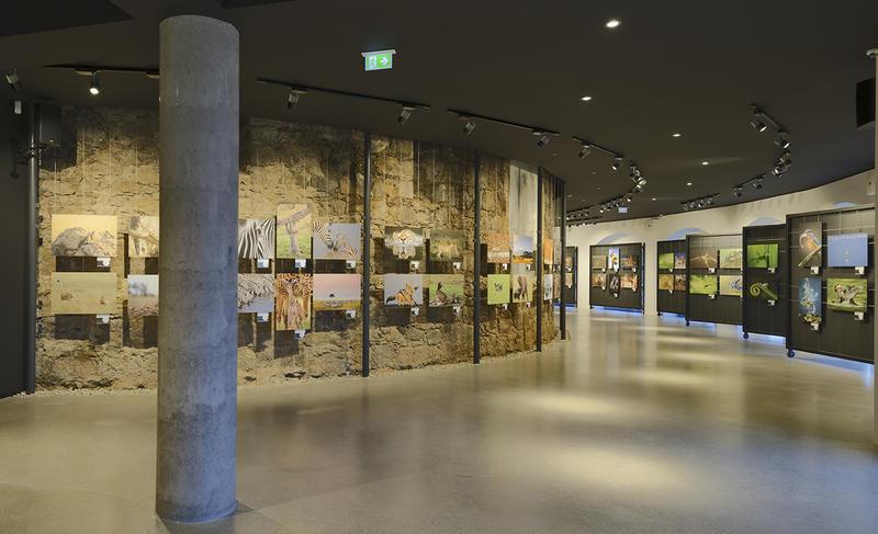 Die Hartlauer Fotogalerie