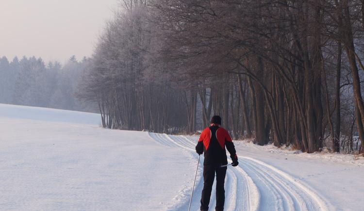 Sanfte Landschaft mit vielen Routenmöglichkeiten in Peuerbach. (© Cornelia Schlosser)