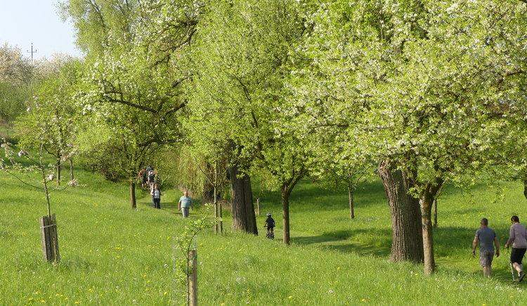 P1020955 (© Naturpark Obst-Hügel-Land)