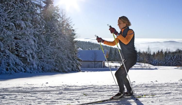Pures Langlaufvergnügen im Nordischen Zentrum Böhmerwald. Skating- und Parallelspur. (© OÖ.Tourismus/Weissenbrunner)