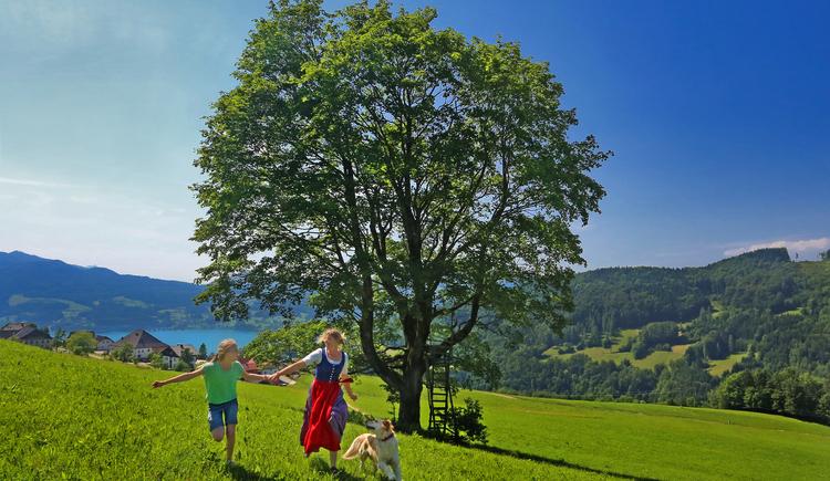 Eine Frau läuft mit Kind und Hund über eine Wiese. (© Naturpark Attersee-Traunsee/Josef Hinterleithner)