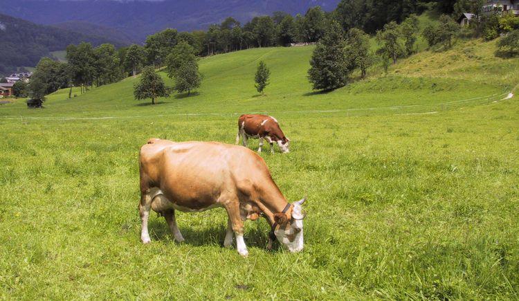 Die tierischen Mitbewohner im Biobauernhof Straubinger. (© Straubinger)