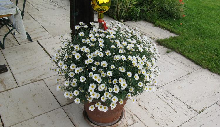 Blumengruß. (© Familie Seitz)