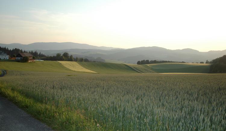 Mühlviertler Landschaft (© TV Pfarrkirchen)