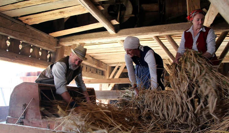 Jeweils in der 3. Woche im September findet seit Jahrzehnten das Maschindreschen im Rahmen der Druschwoche statt. Es wird vorgeführt wie vor langer Zeit auf den Bauernhöfen Getreide gedroschen wurde. (© Degn Film)