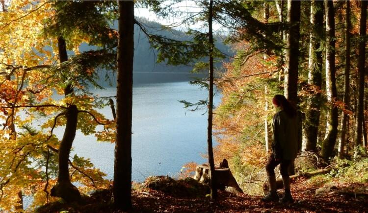 Wald und Teich_Veronika Peherstorfer (© Veronika Peherstorfer)