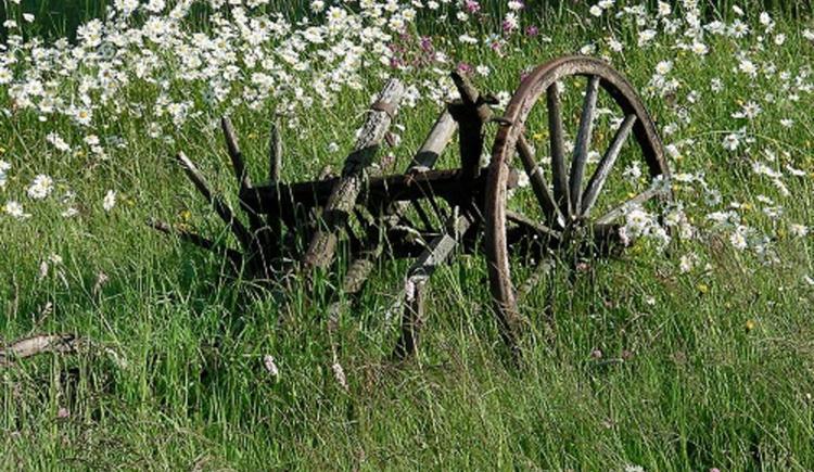 Garten mit Blumenwiese