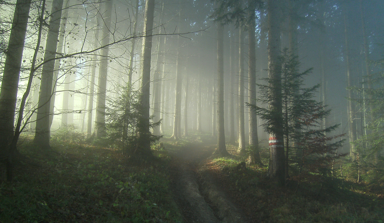 look in the forest, beautiful insidence of light\n