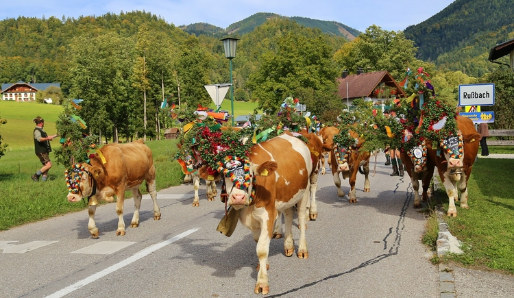 ""\""""Almabtrieb"""" - ceremonial driving down of cattle from the mountain pastures into the valley in autumn""750|435|?|en|2|2364b0b4071965996f4cb914240776bb|False|UNLIKELY|0.32825371623039246