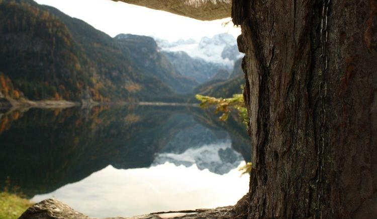 Der wunderschöne Gosausee spiegelt den König Dachstein.