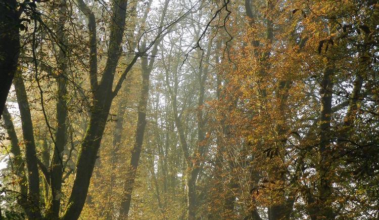 Schloss Katzenberg (© Gutsverwaltung Schloss Katzenberg)