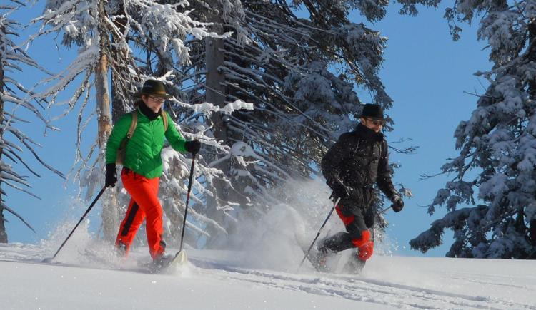 Sabina Haslinger - Schneeschuhwandern (© Waldness im Almtal, Foto Nadine Bammer)