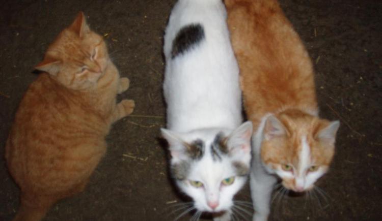 liebevolle Katzen