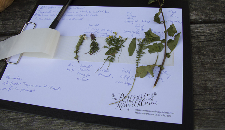 Herbs on a sheet of paper
