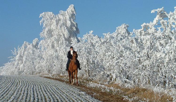 Winterreiten (© Reit-Erlebnis-Akademie Mühlviertler Kernland)