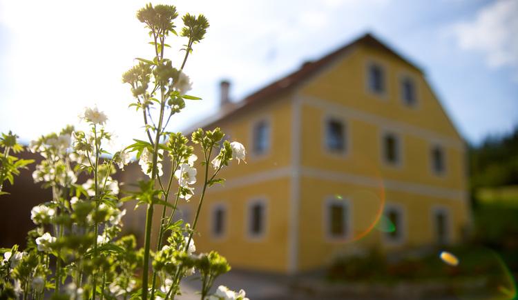 Bio-Bauernhof Leimlehner (© Paireder Johann und Maria)