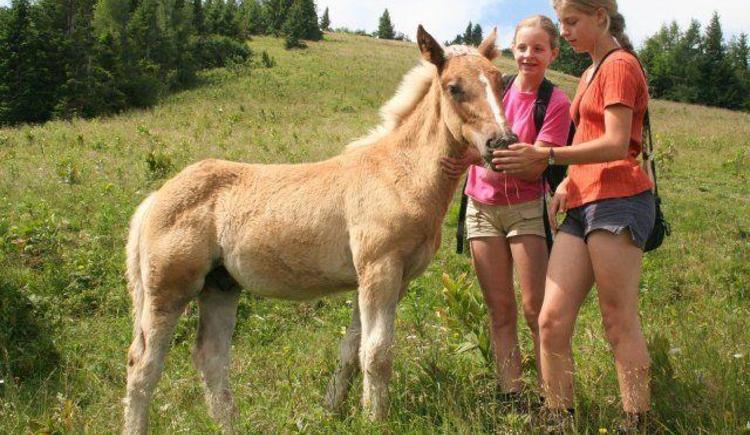 Pony mit Mädchen (© Schmiedbauernhof)