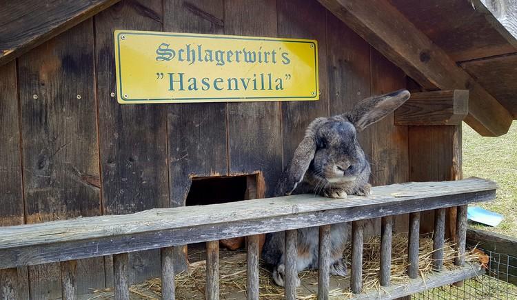Schlagerwirt's Hasenvilla