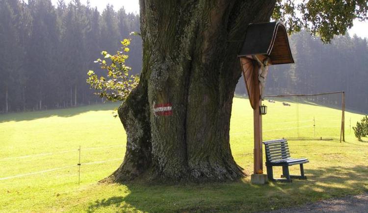Linde beim vulgo Strahlegger (© Verein BENEDIKT BE-WEG-T)