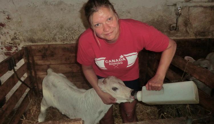 Stall mithelfen, bauernhof ,Kühe