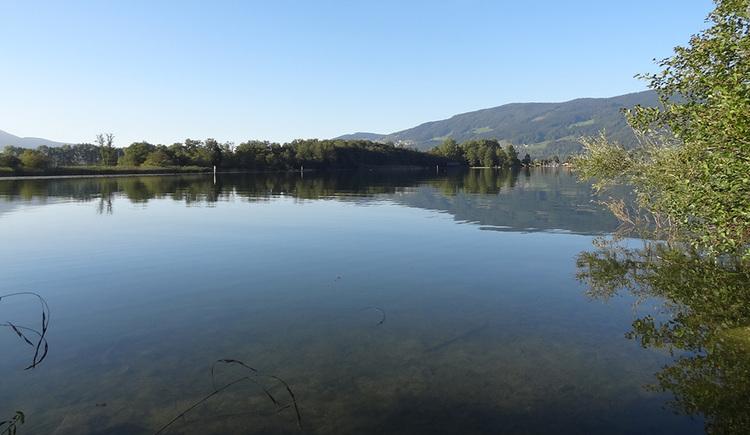 Das Foto zeigt einen Blick über die so genannte Seerosenbucht, eine offene Wasserfläche, im Hintergrund einen Auwald.