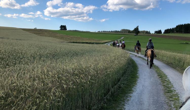 Johannesritt im Pferdereich Mühlviertler Alm (© Markus Danninger)