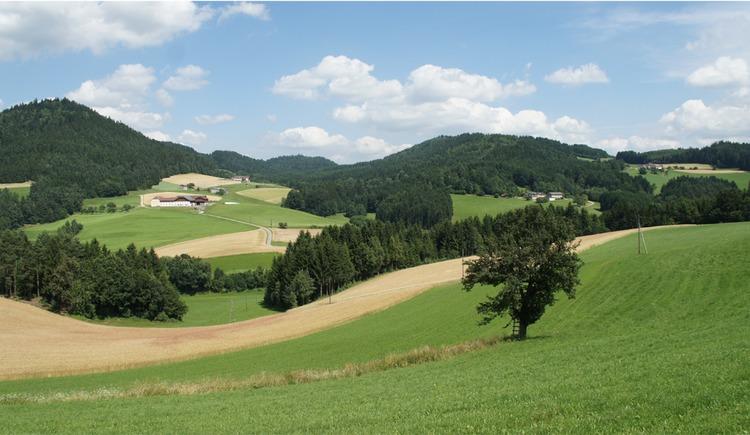 Wellige Landschaft (© Tourismusverband Mühlviertler Kernland)