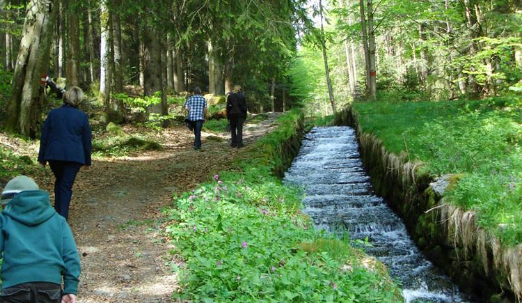 Steilstufe im Wald in der Nähe von St. Oswald bei Haslach.