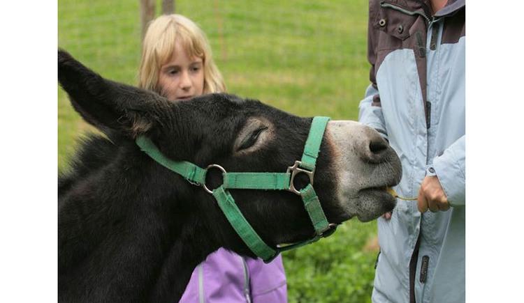Donkey, people