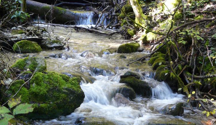 Krottensee - Zeppezau (© Tourismusverband MondseeLand)