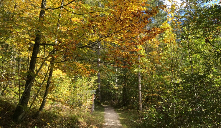 The beautiful hiking trail leads through the Sarstein forest. (© Ferienregion Dachstein Salzkammergut)