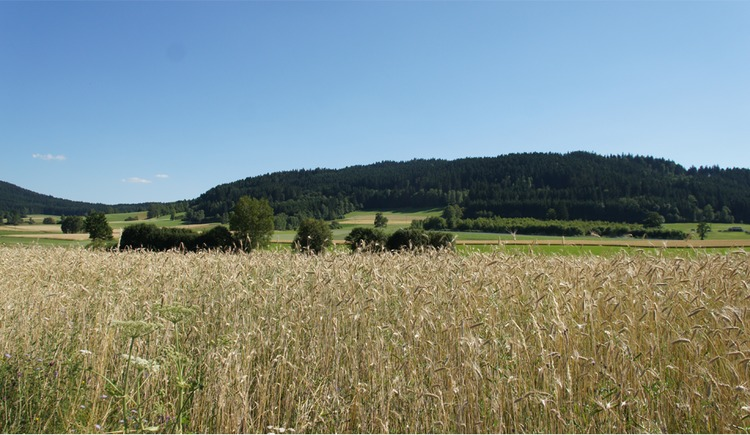 Landschaft nördlich von Freistadt (© Tourismusverband Mühlviertler Kernland)