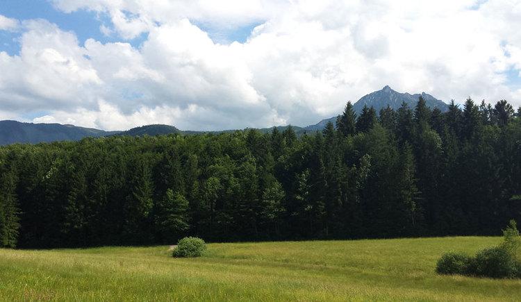Ausblick auf den Rettenkogel (© Conny Rothauer)