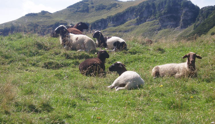 Schafe auf der Reithütte (© Reithütte)