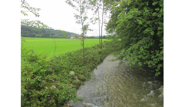 brook, trees and meadow